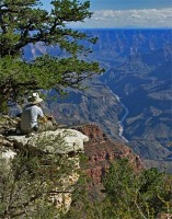 2 Powell Plateau Overlooking The Grand Canyon